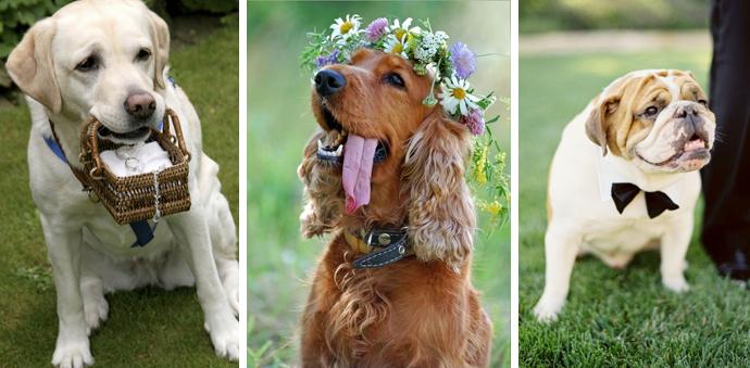 animais em casamentos 01