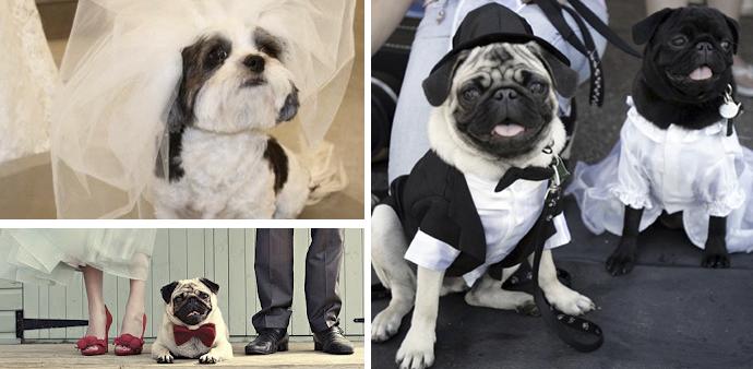 animais em casamentos 02